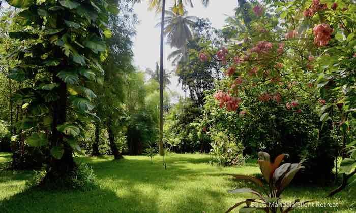 Blick In den Garten im Blue Mandala