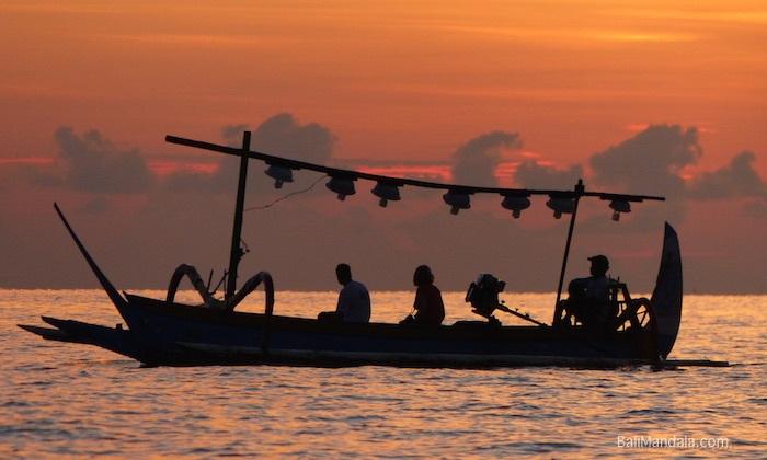 Bild Delfinausflug am Morgen