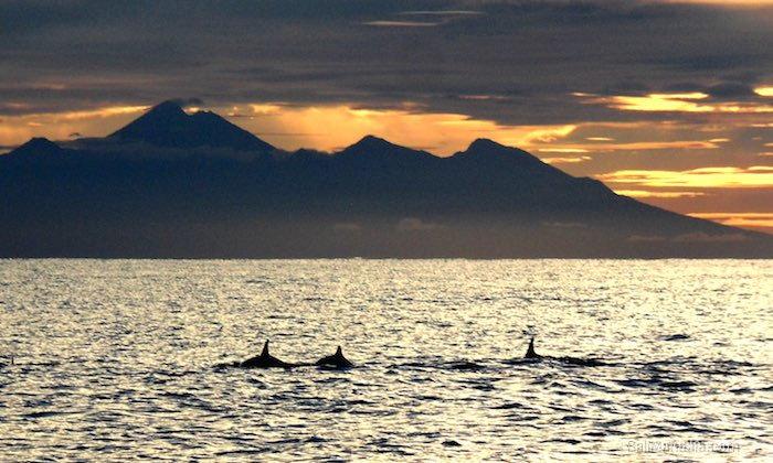 Bild Delfine am Morgen