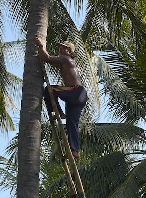 Palmenpfluecker Bali Mandala