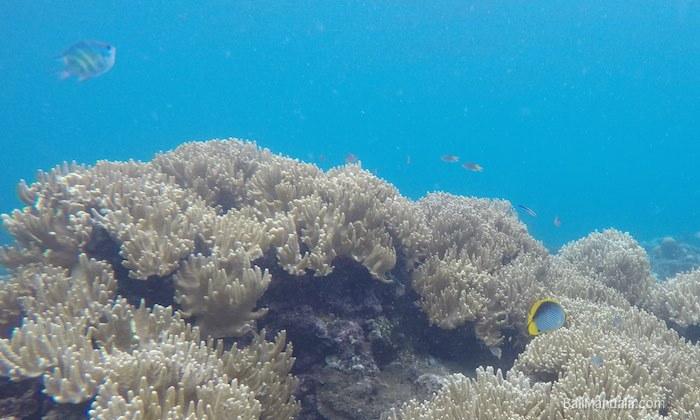 Riff vor dem Bali Mandala