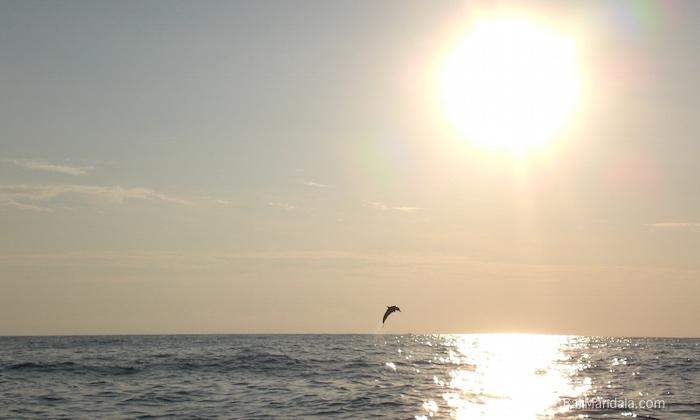 Bild Springender Delfin