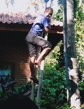 Ngurah beim Kokosnusspflücken